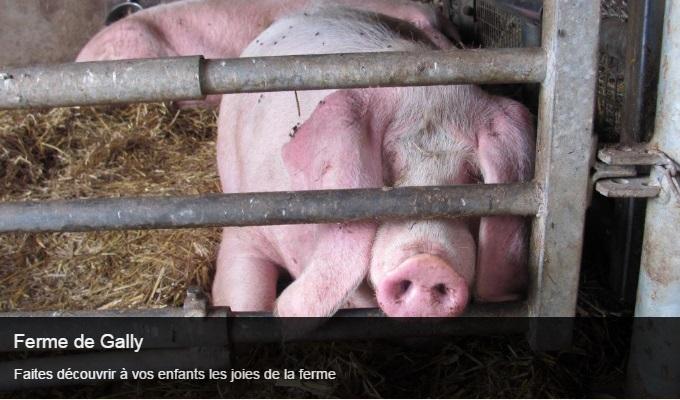 Cliquez sur l'image pour accéder à la fiche sortie de la ferme de Gally
